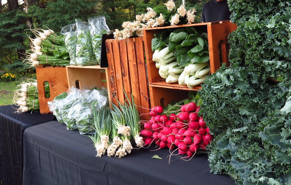 July veggies from Morning Moon Farm